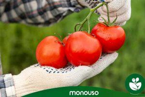 Guide pour préparer les tomates comme un expert